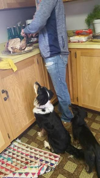 dogs begging